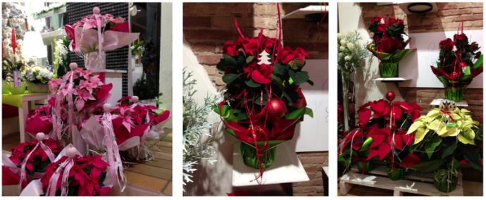 Varietats de Poinsettia a la Floristeria Morera