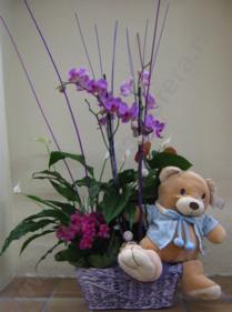 regal per naixements floristeria morera