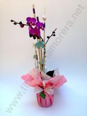 Orquídees de 1 i 2 bares