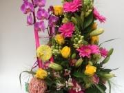 Orquidees amb flors variades