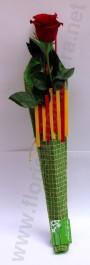 Roses amb bossa de Sant Jordi