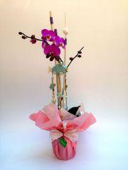 orquidea phalaenopsis de 1 bara